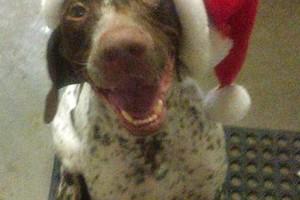 Photo #24: Christmas Boarding - Oak Park Kennels