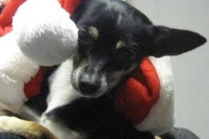 Photo #23: Christmas Boarding - Oak Park Kennels