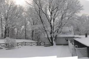 Photo #13: Christmas Boarding - Oak Park Kennels