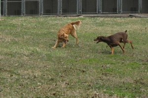 Photo #6: Christmas Boarding - Oak Park Kennels
