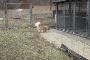 Photo #2: Christmas Boarding - Oak Park Kennels