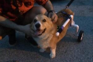 Photo #11: Pet Sitting/ Dog Walking