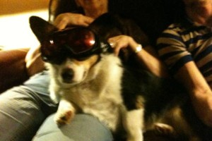 Photo #3: Pet Sitting/ Dog Walking