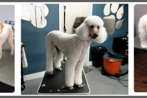 Photo #1: Quality Pet Spot Dog Grooming