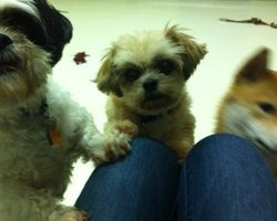 Photo #1: 2 Paws UP Dog Daycare & Boarding, Inc.