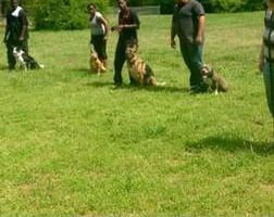 Photo #1: Dog training by Tiki Quinn