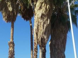 Photo #5: Palm/Tree service