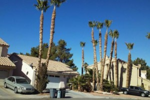 Photo #4: CLEAN UP! TREE TRIMMING! LAWN CARE! FREE ESTIMATE...