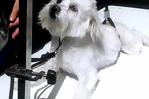 Photo #8: SMART CHOICE Professional Dog Grooming / 1 Dog $15.00