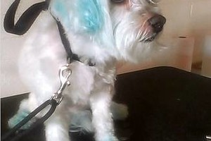 Photo #6: SMART CHOICE Professional Dog Grooming / 1 Dog $15.00
