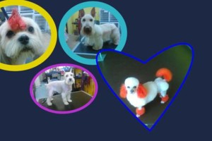 Photo #2: NEW DOG GROOMING! ONLY $27.99 FULL GROOMING