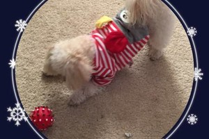 Photo #4: Pet Pet Sitter/sitting *Affordable Rates*at only $15/night, also...
