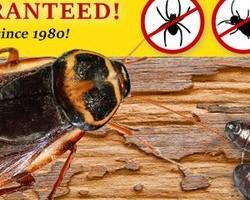 Photo #1: Aardvark Motown Pest Control