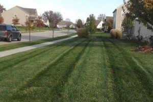 Photo #6: Highest Quality Lawn Care in Columbus! Professionally Striped Lawns.