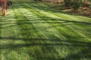 Photo #4: Highest Quality Lawn Care in Columbus! Professionally Striped Lawns.