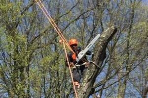 Photo #1: Art tree service - Tree / Stump removal
