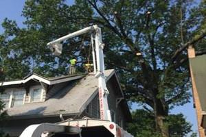 Photo #3: Art tree service - Tree / Stump removal