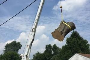 Photo #4: Art tree service - Tree / Stump removal
