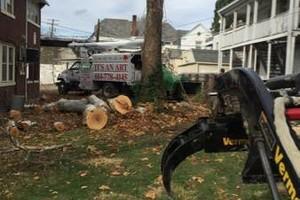 Photo #5: Art tree service - Tree / Stump removal