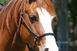 Photo #1: Professional Horse Trainer