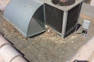 Photo #11: PIGEON REMOVAL / CONTROL