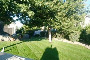 Photo #1: Clean View Landscaping
