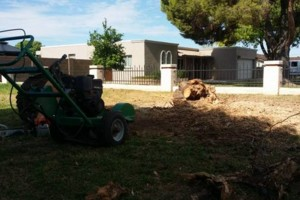 Photo #4: Trees by me. Stump Grinding