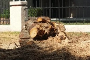 Photo #3: Trees by me. Stump Grinding