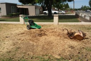 Photo #2: Trees by me. Stump Grinding