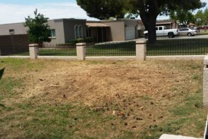 Photo #1: Trees by me. Stump Grinding