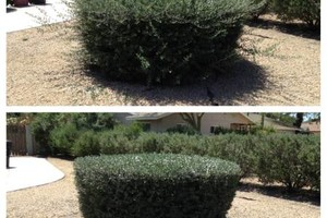 Photo #7: Landscaping & Maintenance Serive. Weeds & trees