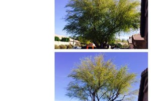 Photo #6: Landscaping & Maintenance Serive. Weeds & trees