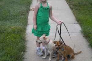 Photo #19: IN HOME DOG TRAINING