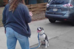 Photo #13: IN HOME DOG TRAINING