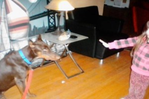 Photo #12: IN HOME DOG TRAINING