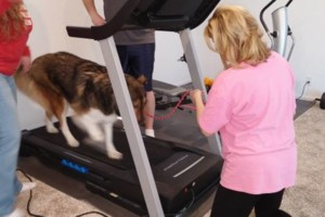 Photo #6: IN HOME DOG TRAINING