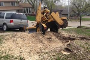Photo #4: TREE SERVICE, STUMP GRINDING (BELLEVUE, PAPILLION, OMAHA)