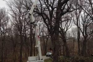 Photo #2: TREE SERVICE, STUMP GRINDING (BELLEVUE, PAPILLION, OMAHA)