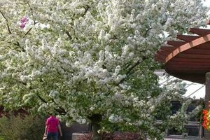 Photo #3: Jensen Gardens Inc. Certified Arborist