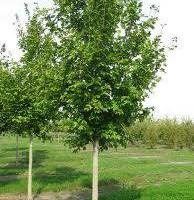 Photo #2: Jensen Gardens Inc. Certified Arborist