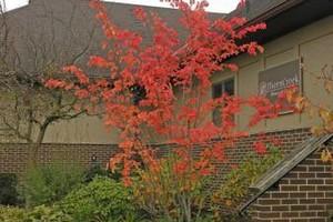 Photo #1: Jensen Gardens Inc. Certified Arborist