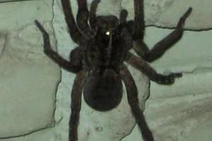 Photo #1: Patron Exterminators & Pest Control