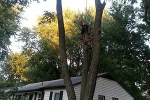 Photo #10: Growing Green. Tree Trimming and Removal