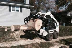 Photo #5: Tree Service - Tree Removal, Tree Trimming, Stump Removal