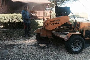 Photo #4: Tree Service - Tree Removal, Tree Trimming, Stump Removal
