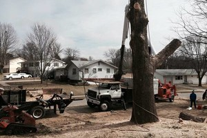 Photo #2: Tree Service - Tree Removal, Tree Trimming, Stump Removal