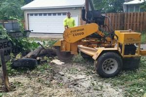Photo #1: Tree Service - Tree Removal, Tree Trimming, Stump Removal