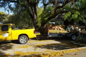 Photo #1: GT Services. Junk removal