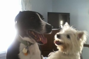 Photo #13: Dawn's Lucky Dogs. Pet Sitting In My Home & The Best!