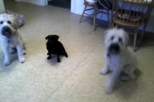 Photo #3: Dawn's Lucky Dogs. Pet Sitting In My Home & The Best!